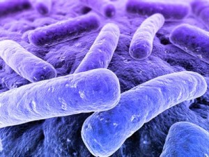 bacterias halitosis burgos